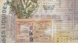 "Tecido ""Tim Holtz Eclectic Elements Botanical"""